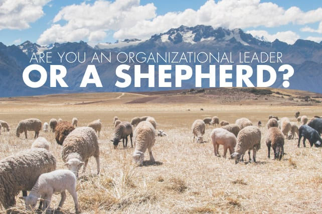 Are You An Organizational Leader Or A Shepherd? (10 Easy Ways To Tell)