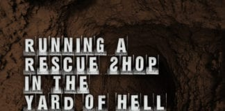 Running a Rescue Shop in the Yard of Hell