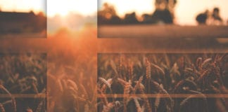 Trust In The God of The Harvest