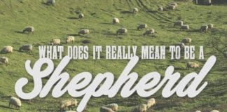 What Does It Really Mean to be a Shepherd