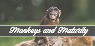 Monkeys and Maturity: How Not to Grow Spiritually