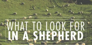 What to Look For in a Shepherd