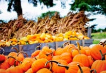 5 Effective Ways to Follow Up with Fall Festival Guests