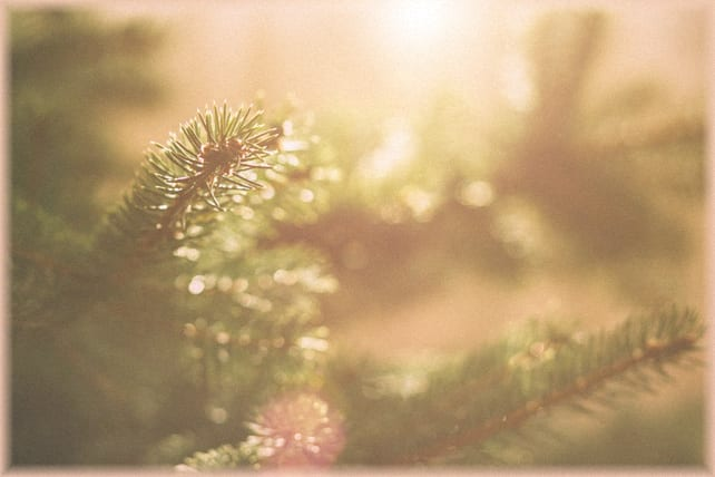 3 Ways to Focus on God's Presence This Christmas