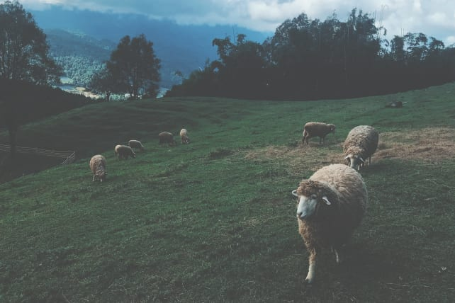 Why Knowing Your Flock is Critical to Meaningful Preaching