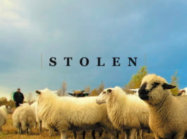 3 Ways to Keep Your Sheep From Being Stolen