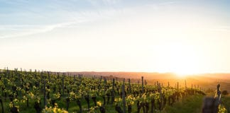 lessons from a vineyard farmer