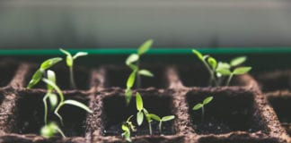 Transcience and Church Planting
